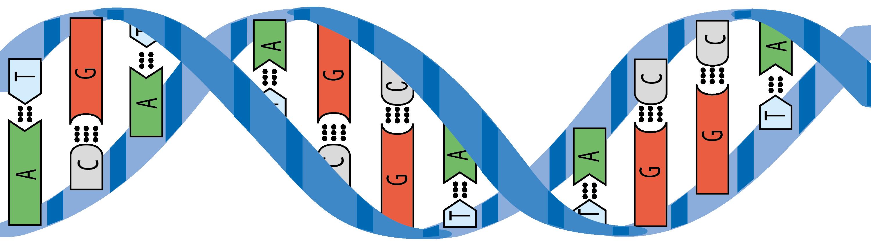 Tekening van de dubbele helix van DNA.